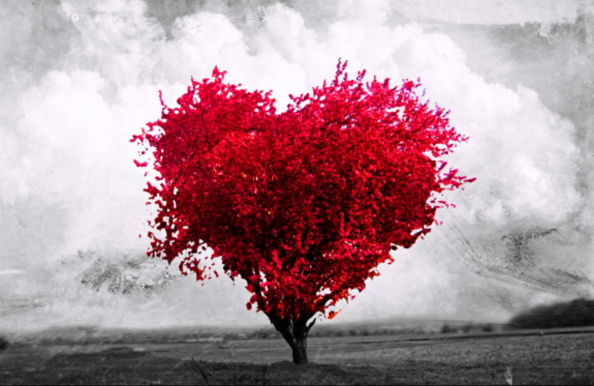 Amor-arbol